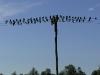 lonjski-golubovi