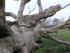 staro-stablo
